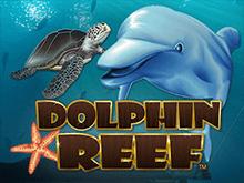Рейтинговый онлайн слот Dolphin Reef для смелых и азартных игроков
